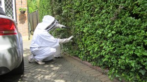 wasp treatments in Brighton and Hove.