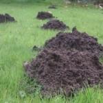 Burgess Hill mole control service
